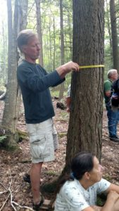 John Endicott measures a tree to determine the carbon dioxide stored in the tree.